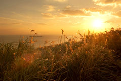 Reeds in the sunshine at sunset Royalty Free Stock Photos