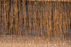 Reeds texture Royalty Free Stock Photos