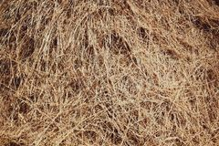Straw, dry straw texture background, vintage style for design. Reeds texture. Straw surface. Thatch pack canvas. Straw pack texture. Stack of straw texture stock photos