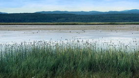 Reeds on tranquil lake bed stock video
