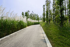 Reeds and trees along asphalt road in sunny summer Stock Photos
