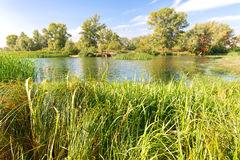 Reeds and trees in the River Royalty Free Stock Photo