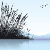 Reeds In The Water. Vector silhouette of some reeds in the water Royalty Free Stock Image