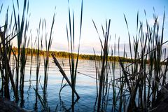 Reeds by the water Royalty Free Stock Photos