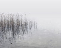 Reeds and water Stock Image