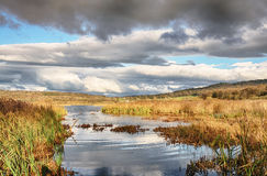 Reeds and water at Leighton Moss, Lancashire Stock Images