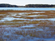 Reeds on Water stock photography
