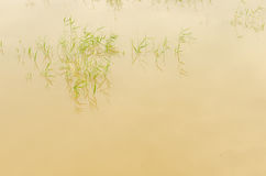 Reeds and water reflection Stock Photos