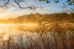 Reeds at the water's edge and autumn fog Royalty Free Stock Photos