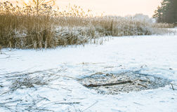 Reeds in winter frost and lake. Reeds in winter frost at sunrise lake nad hole in lake for quick bath after hot bath Royalty Free Stock Photos