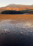 Reeds in Winter, Loch Slapin, Skye, Scotland Royalty Free Stock Photo
