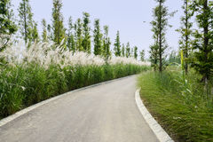 Reeds and woods by curving asphalt road in sunny summer Royalty Free Stock Photography