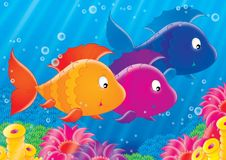 Reef 12. Illustration for children. A series  Reef . Animals of a coral reef. Fish Royalty Free Stock Photo
