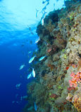 Reef Royalty Free Stock Photography
