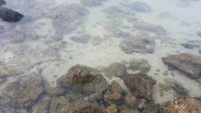 reef Stockfoto