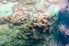 Reef from Above Water Royalty Free Stock Photos