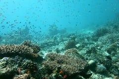 The reef of Angaga Stock Photo