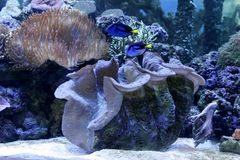 Reef aquarium Stock Images