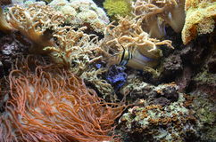 Reef aquarium Royalty Free Stock Image