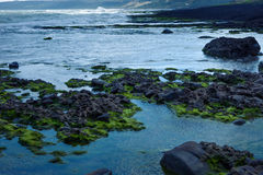 Reef on beach Royalty Free Stock Images