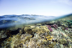 Reef Below. Over and under in Egypt's Red Sea Royalty Free Stock Photos