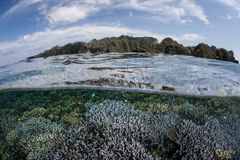 Reef-Building Corals and Limestone Islands Royalty Free Stock Photography