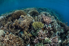 Reef-building Corals and Sea Surface Stock Photography