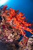 Reef and colored corals, Red Sea. Reef and colored soft corals, Red Sea, south Sinai, Egypt Stock Photo