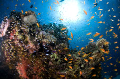 Reef and colored school of fish Stock Photos