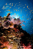 Reef and colored school of fish, Red Sea, Egypt Stock Photography
