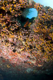 Reef, Colorful corals, Maldives. Fish in the Reef, Indian Ocean, Maldives Stock Images