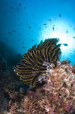 Reef, Colorful seastar, Maldives. Corals in the Reef, Indian Ocean, Maldives Stock Images