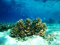 Reef Community Stock Image