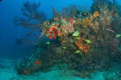 Reef Composition with Grunt Fish Stock Image