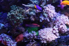 Reef and coral Stock Photos