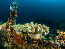 Reef and coral maldives. Maldives 2015 by walter schmit royalty free stock photo