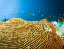 Reef and coral maldives Royalty Free Stock Photography
