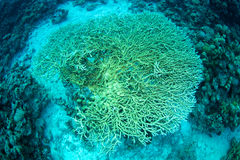 Reef and coral Stock Image