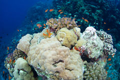 Reef and coral Royalty Free Stock Photo