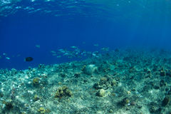 Reef and coral Royalty Free Stock Image