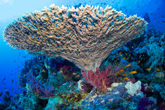 Reef and coral Stock Photo