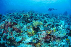 Reef and coral Royalty Free Stock Images