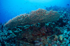 Reef and coral Stock Photography