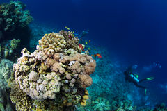 Reef and coral Royalty Free Stock Photos