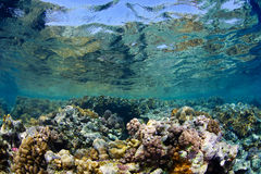 Reef and coral Stock Images