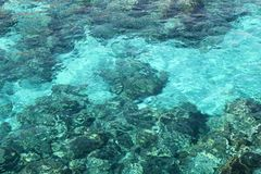 Reef of Corals Royalty Free Stock Photo