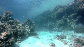 Reef,  The corals and fish. Coral reef. Exotic fishes. The beauty of the underwater world. Life in the ocean. Diving on a tropical reef. Submarine life. Clear stock video footage