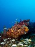 Reef Fish Stock Photo