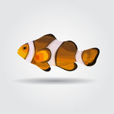 Reef fish, clown fish fish isolated. On white background Stock Photo