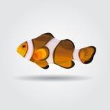 Reef fish, clown fish fish isolated Stock Photo